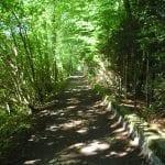 Fussweg der Emme entlang