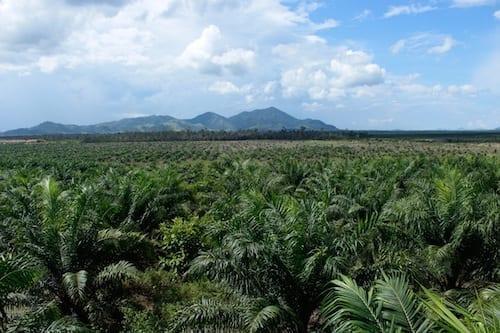 plantage-Sungai-Kelik-_MG_2998-foto-Urs-Walter